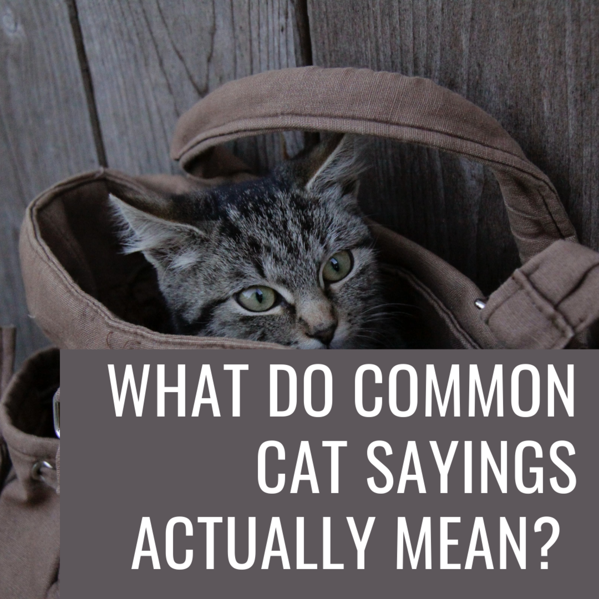 Cats come up in our day-to-day language! But what do all of these sayings actually mean?