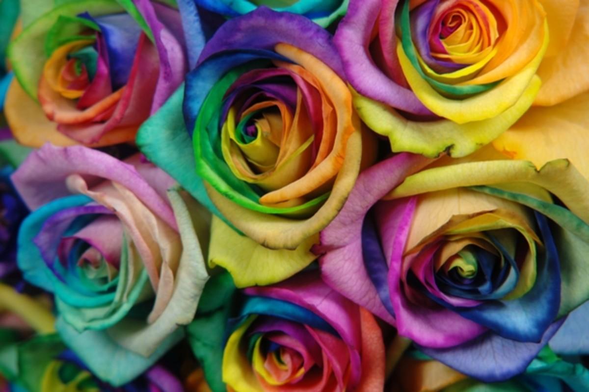 valentines rainbow roses