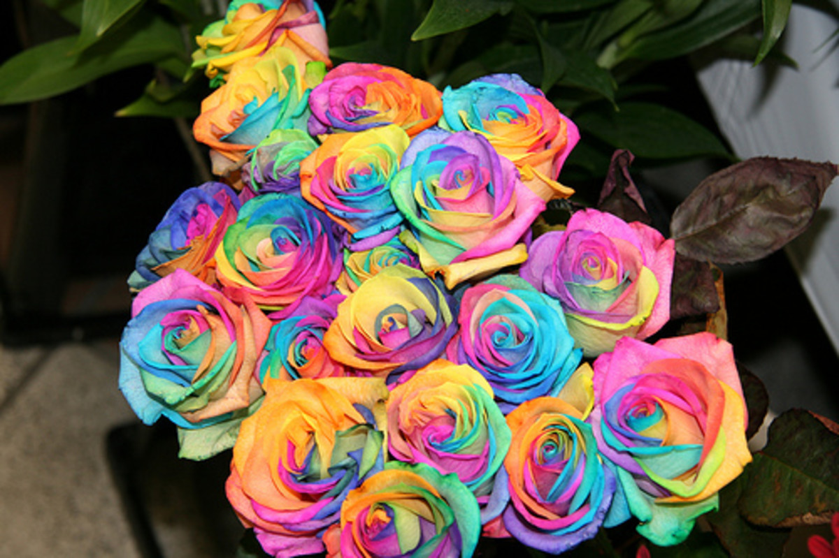 Bouquet of happy roses the rainbow roses