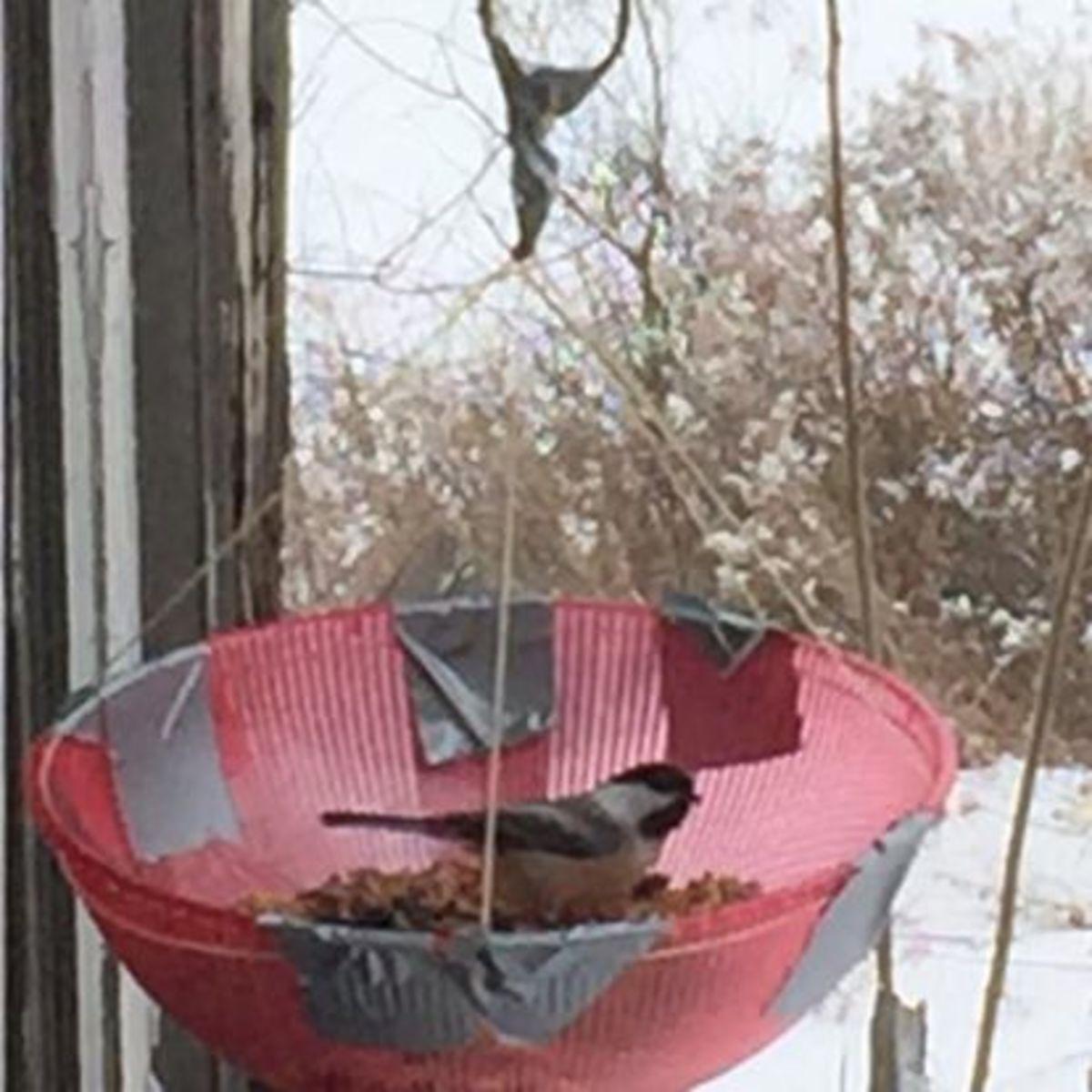 Chip Bowl Birdfeeder