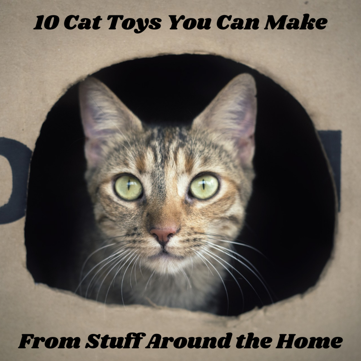 This article will provide 10 examples of cat toys you can make from common things you can find around the home.