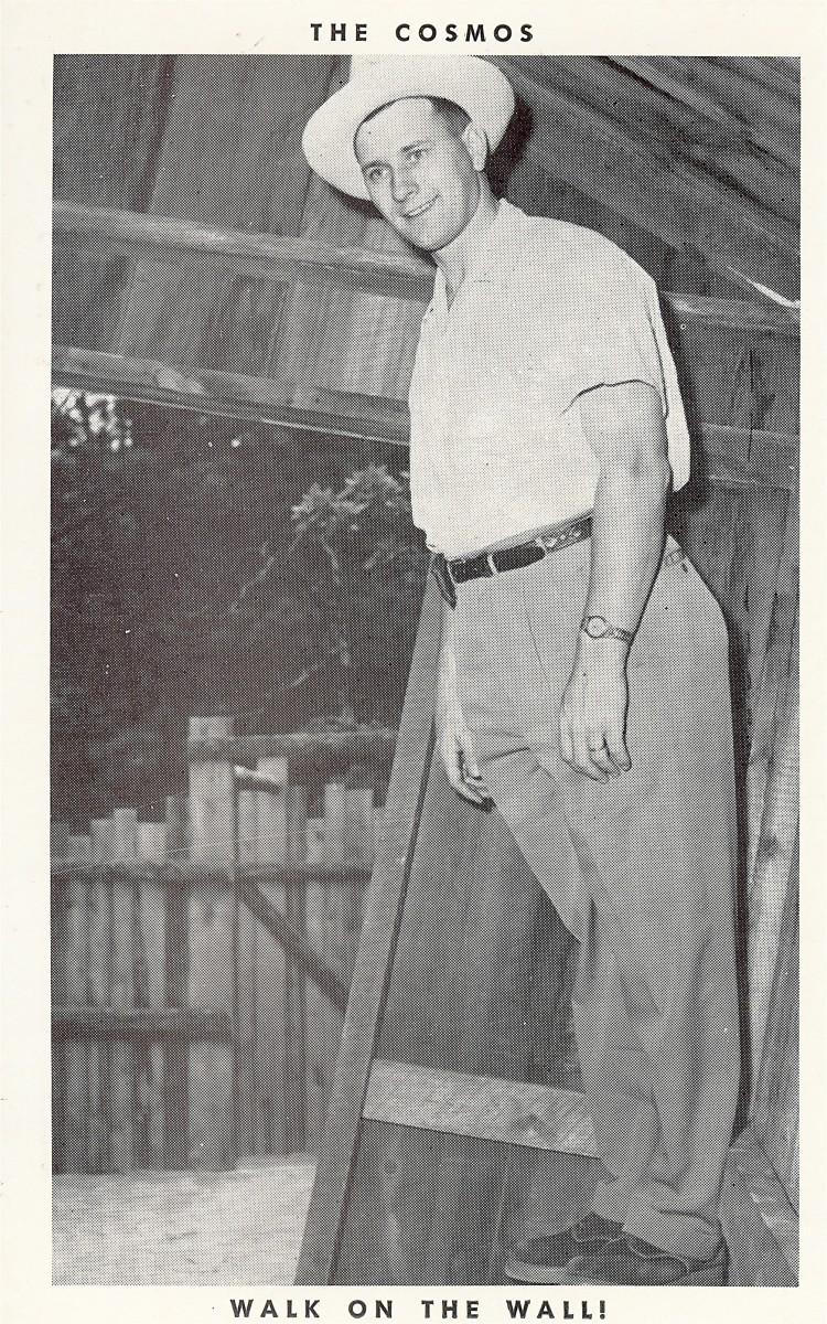 Cosmos vintage postcard