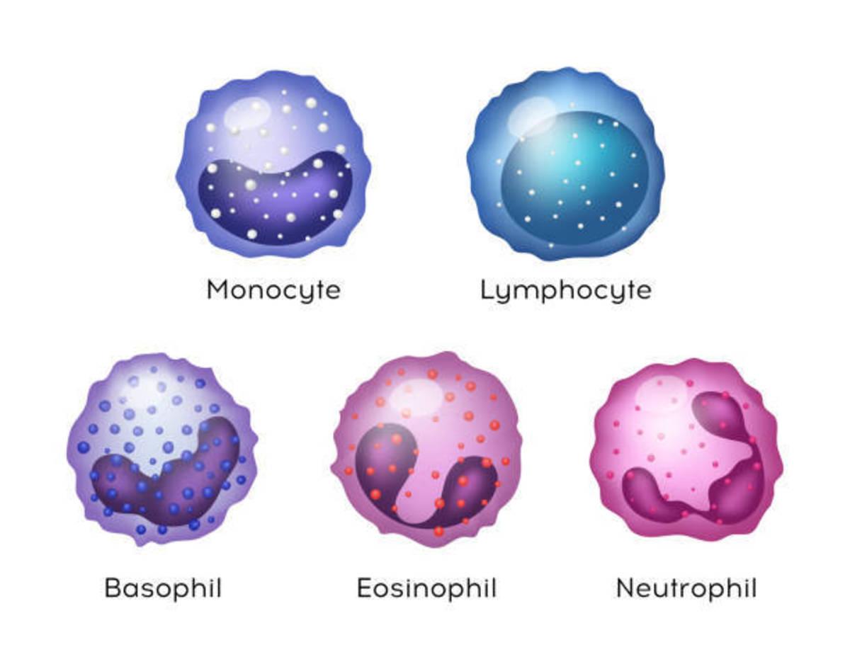 white-blood-cell-leukocyte-test-dlc-tlc