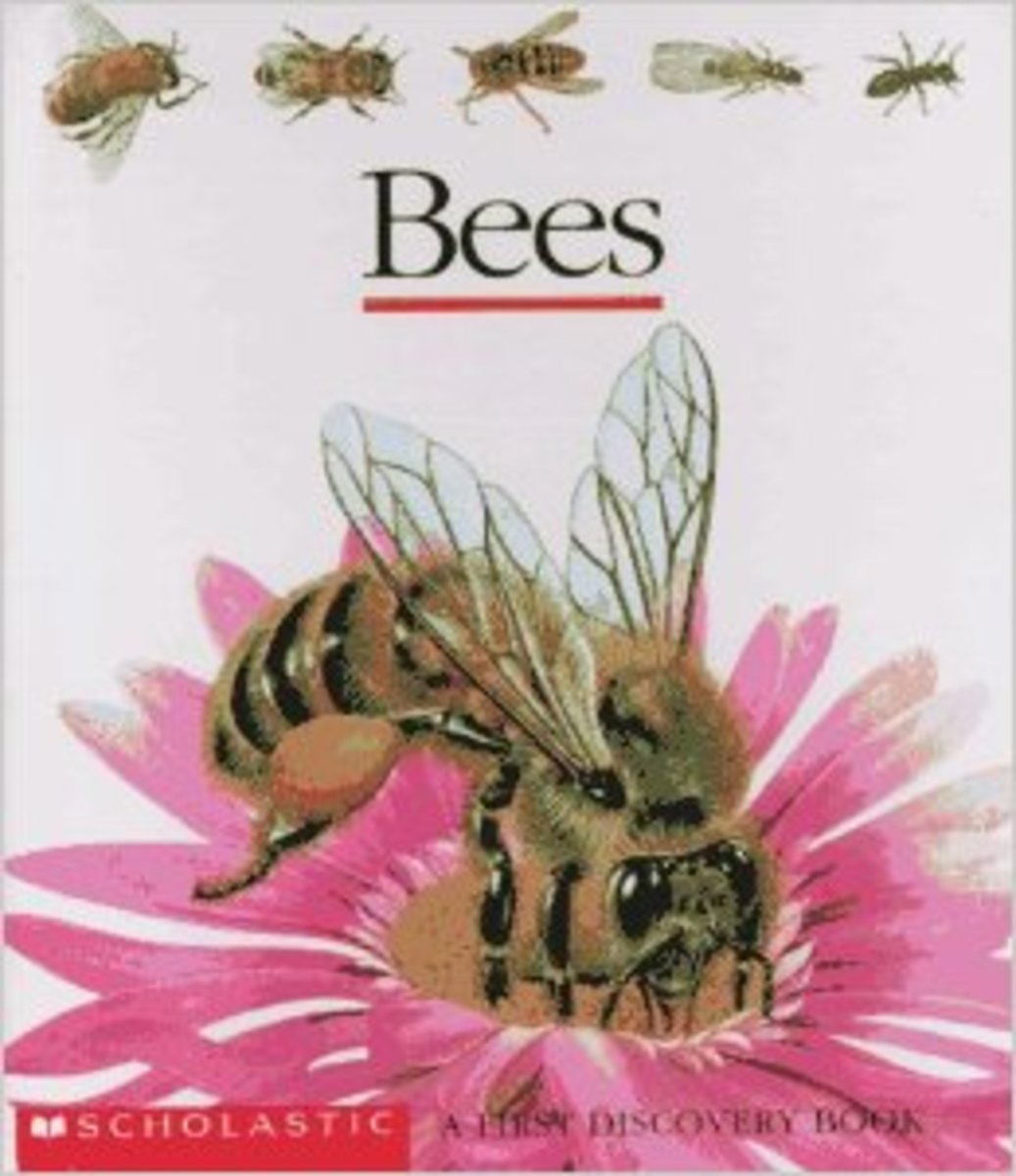 Bees (First Discovery) by Gallimard Jeunesse