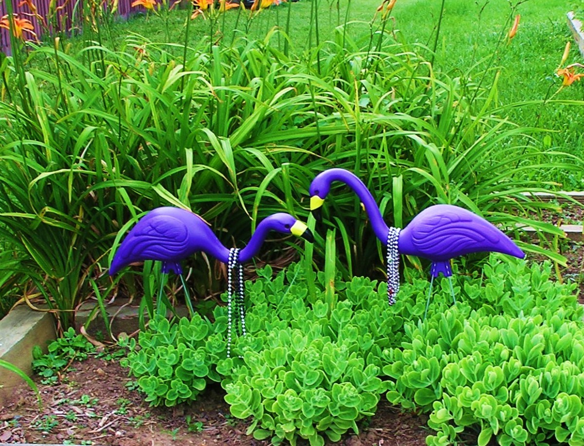 Wild Baltimore Raven Flamingos captured on film.  Thank goodness they aren't rare!