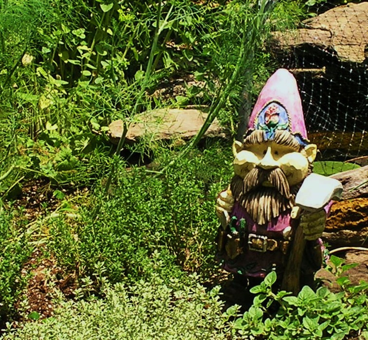Gnome guarding the herbs.