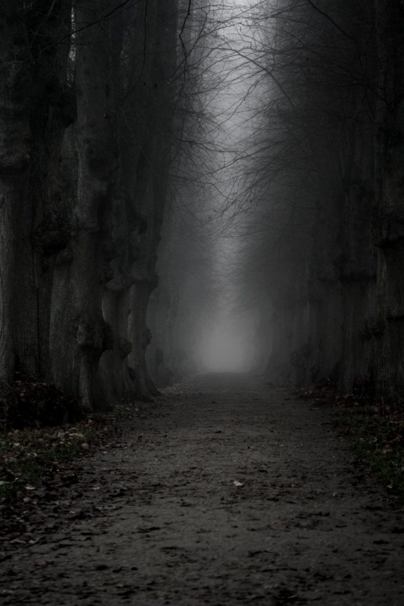 The Dark Path by StonyStonelsStoned2