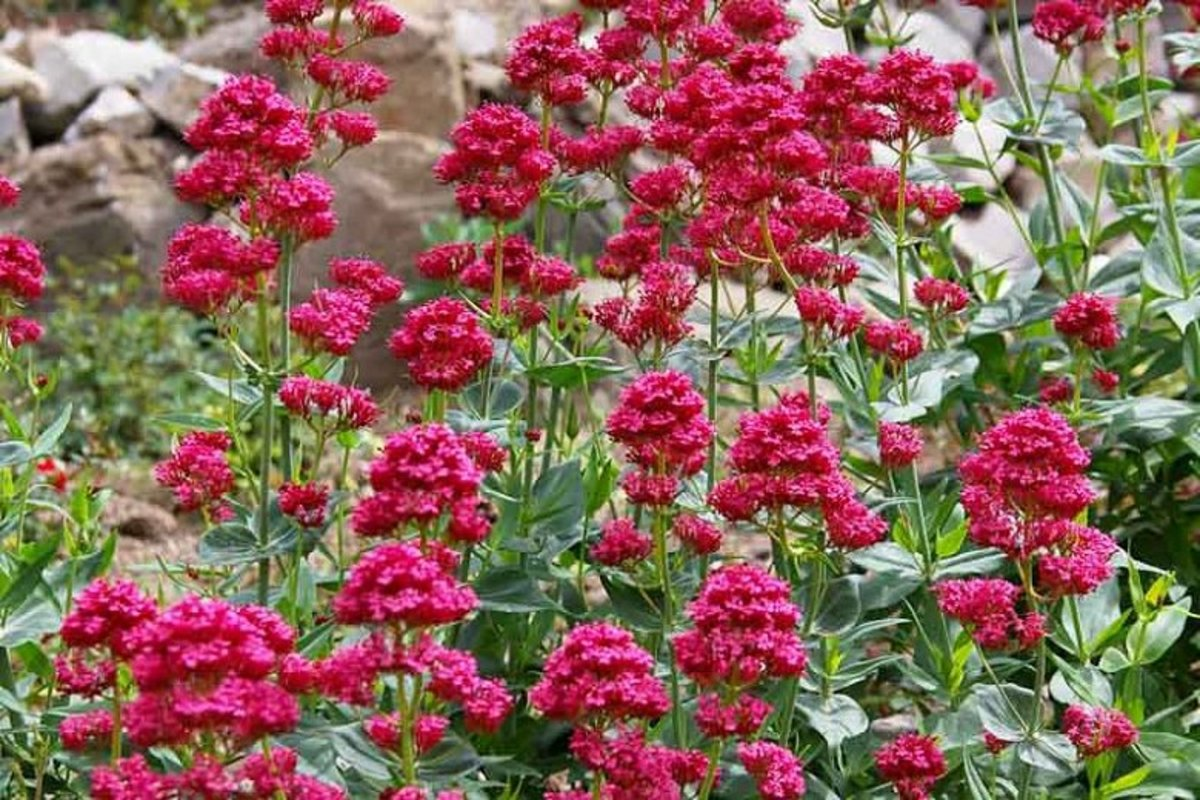 6 Perennial Late-Blooming Plants to Add Color to Your Fall Garden