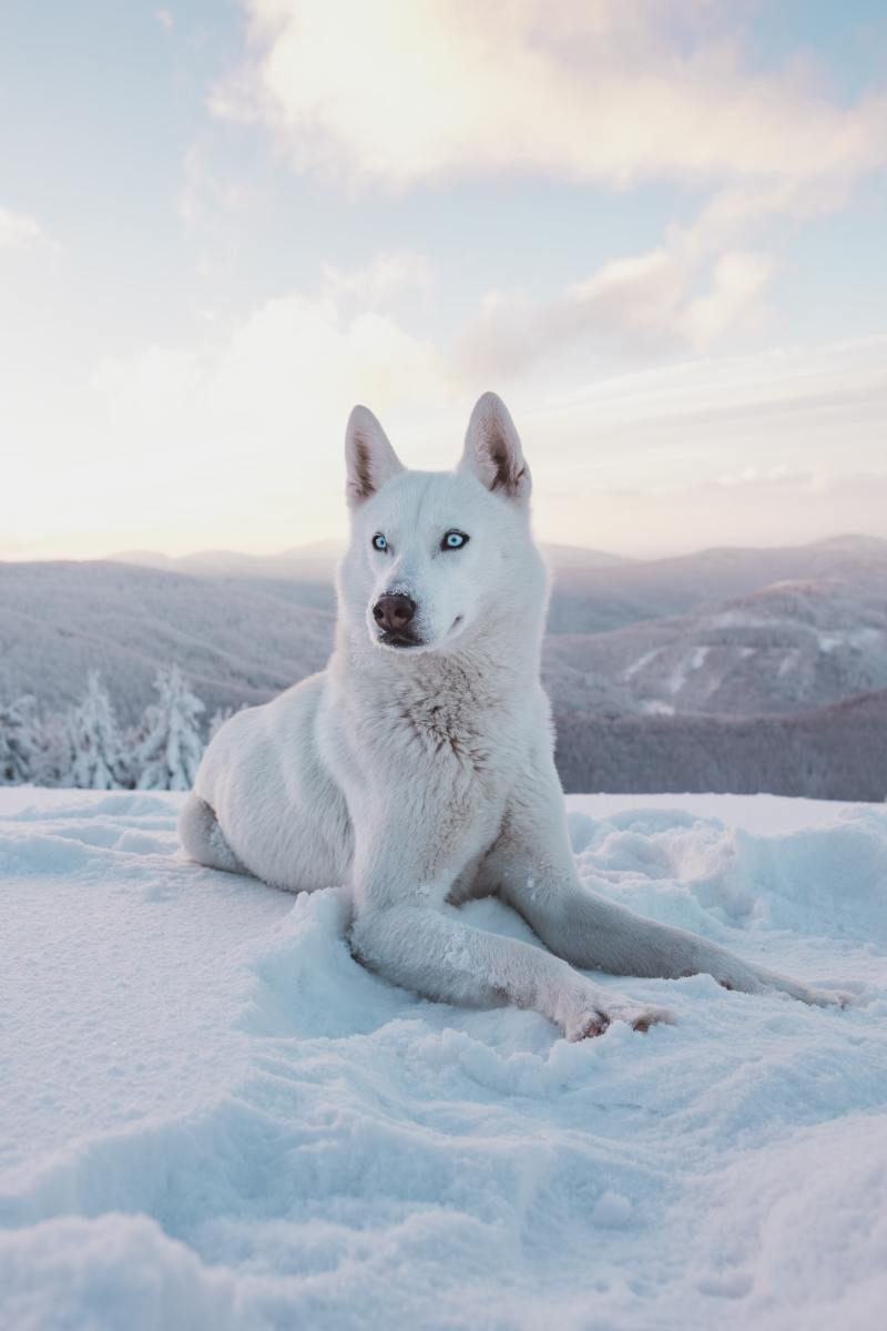Arctic Name Ideas for Dogs