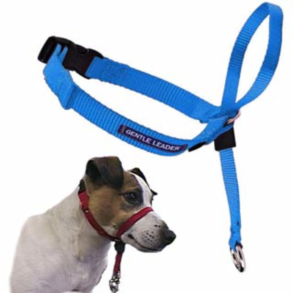 A Gentle Leader head halter. Connect your leash to the ring beneath the chin for more control over the dog's head.