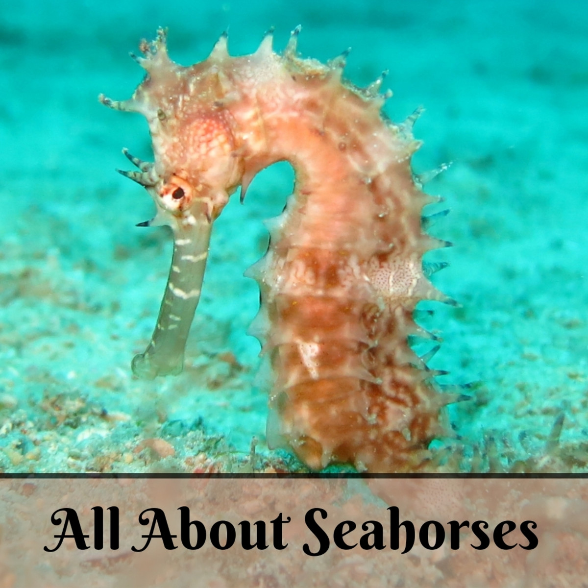 Facts about seahorses and a guide to caring for them