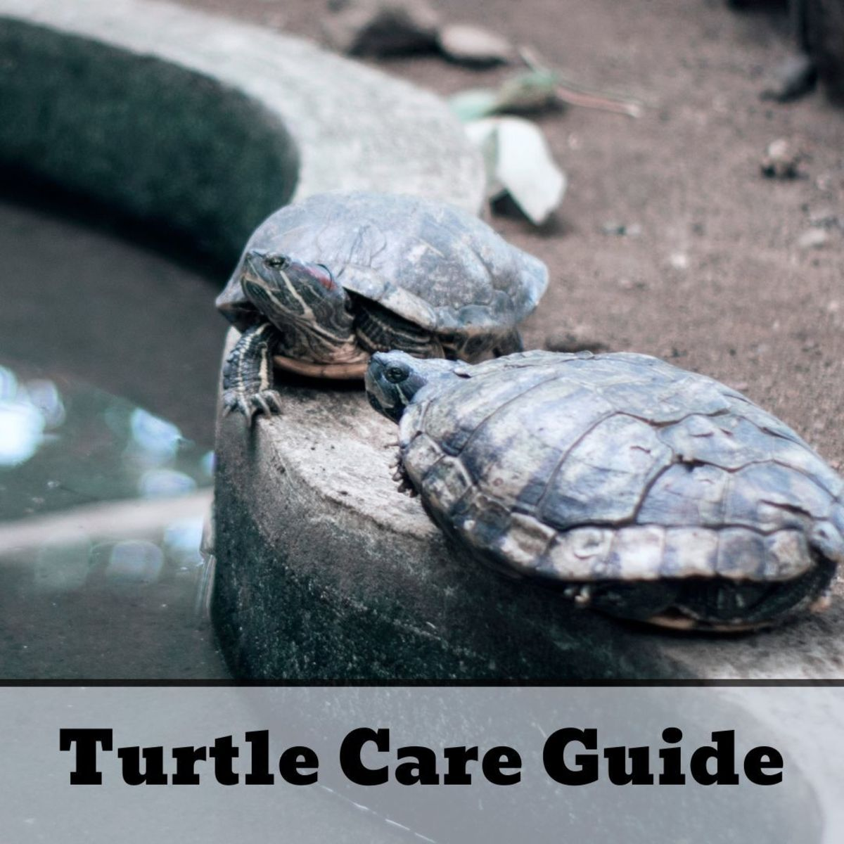 Turtle Care 101: How to Take Care of a Turtle