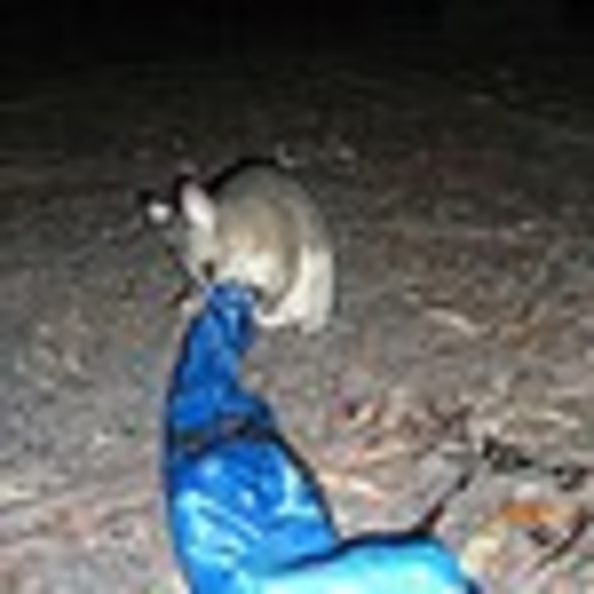 Watch out for cheeky possums at night ! This is at a National Park in NSW !