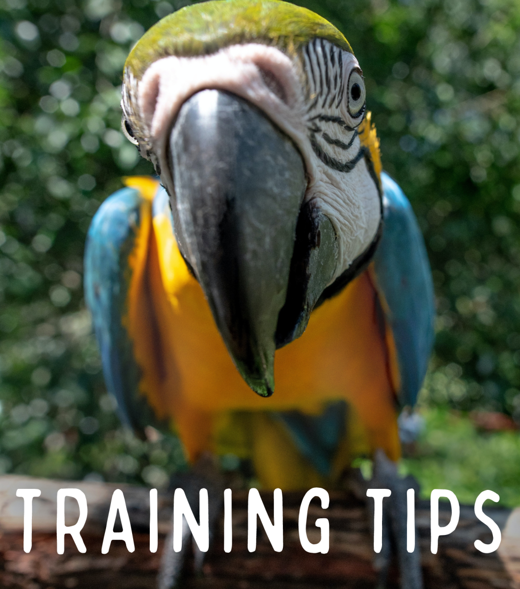 How to Train Your Macaw