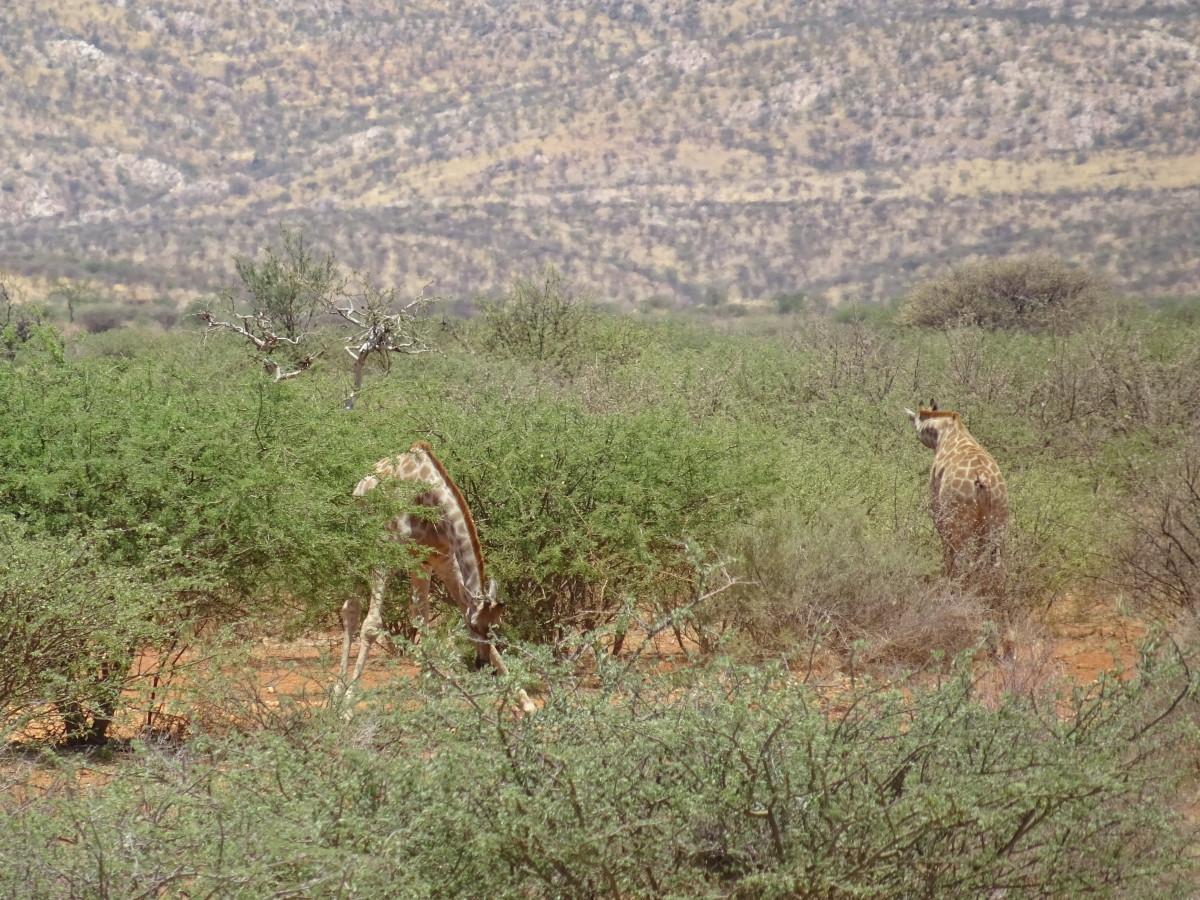 an-express-safari-in-the-namib-desert