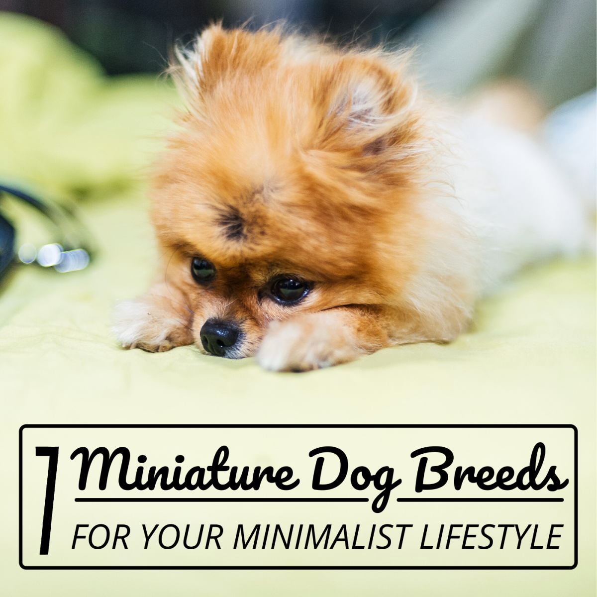 These seven small dogs are perfect for those seeking an adorable miniature companion.