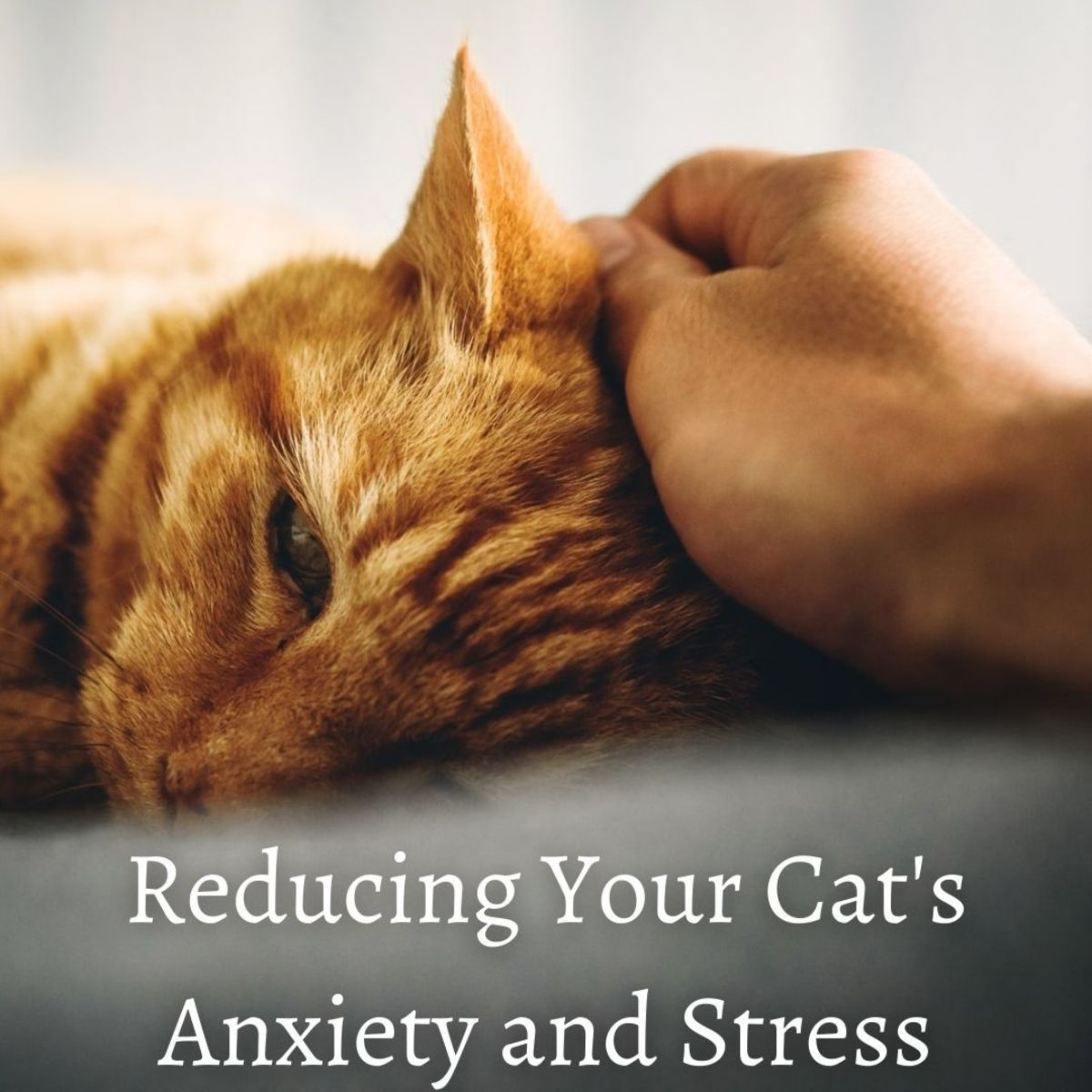 Cats are no different to human beings. They are equally as capable of suffering from anxiety and stress.