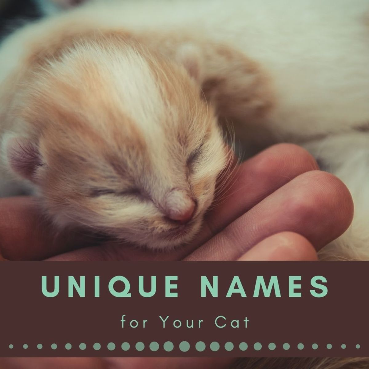 It can be difficult to find a unique cat name you like and fits your pet.