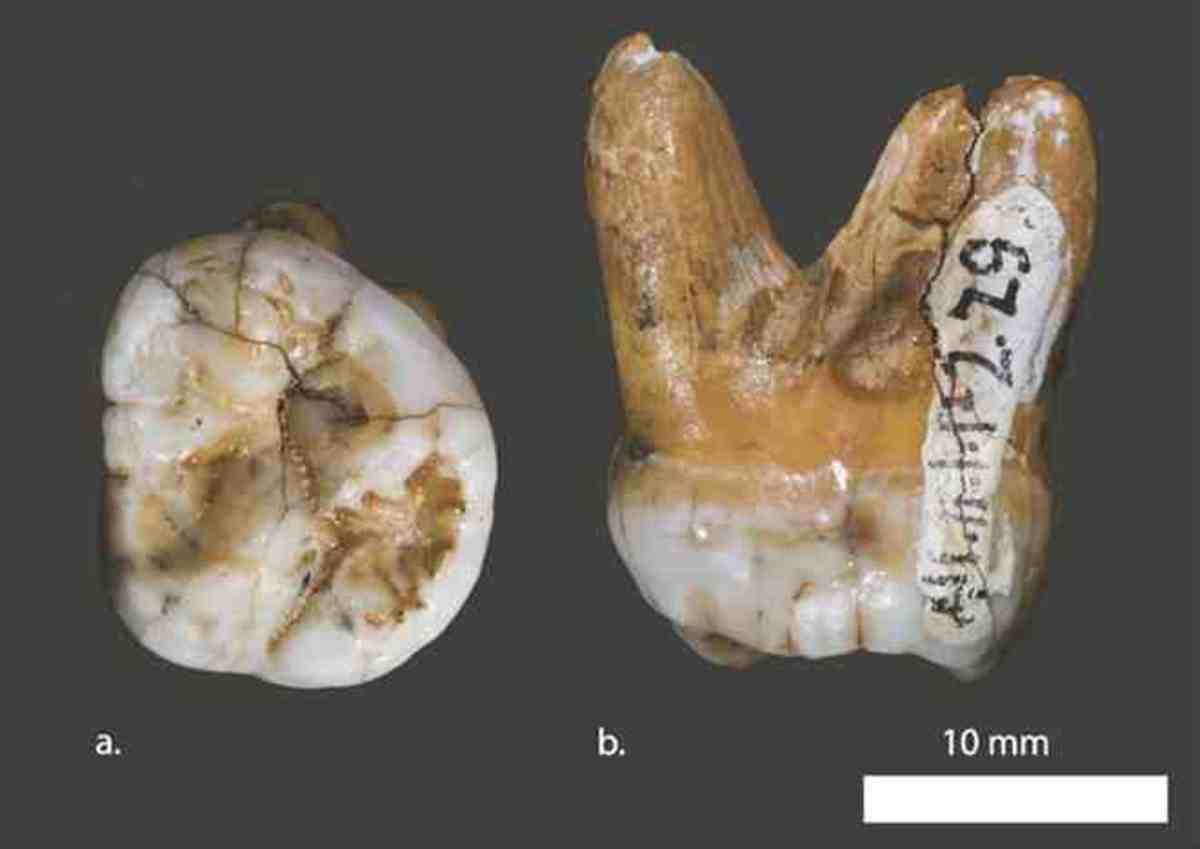 denisovans-a-new-exciting-discovery-for-archaology-a-new-breed-of-man-who-interbred-with-humans