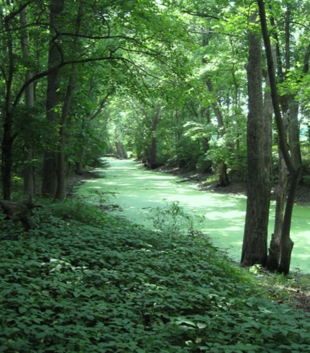 delphi-indiana-canal
