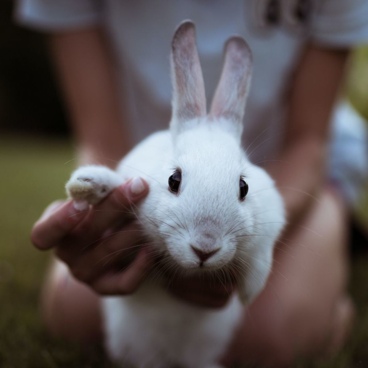 What is the best bunny for kids?