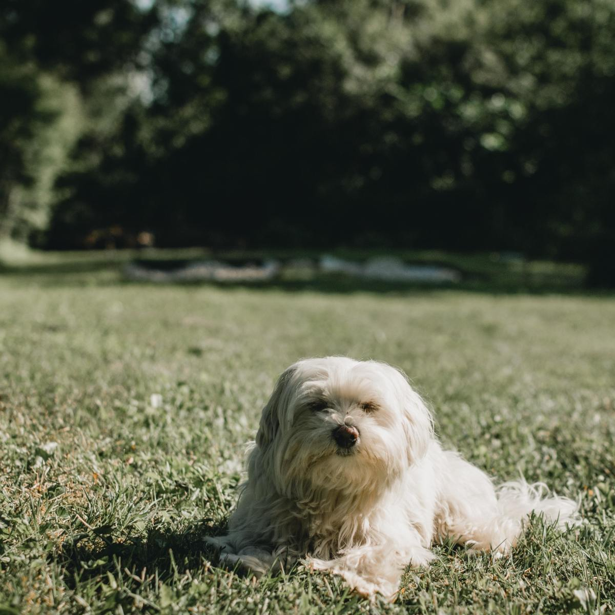 Your dog may eat grass when his stomach is upset.