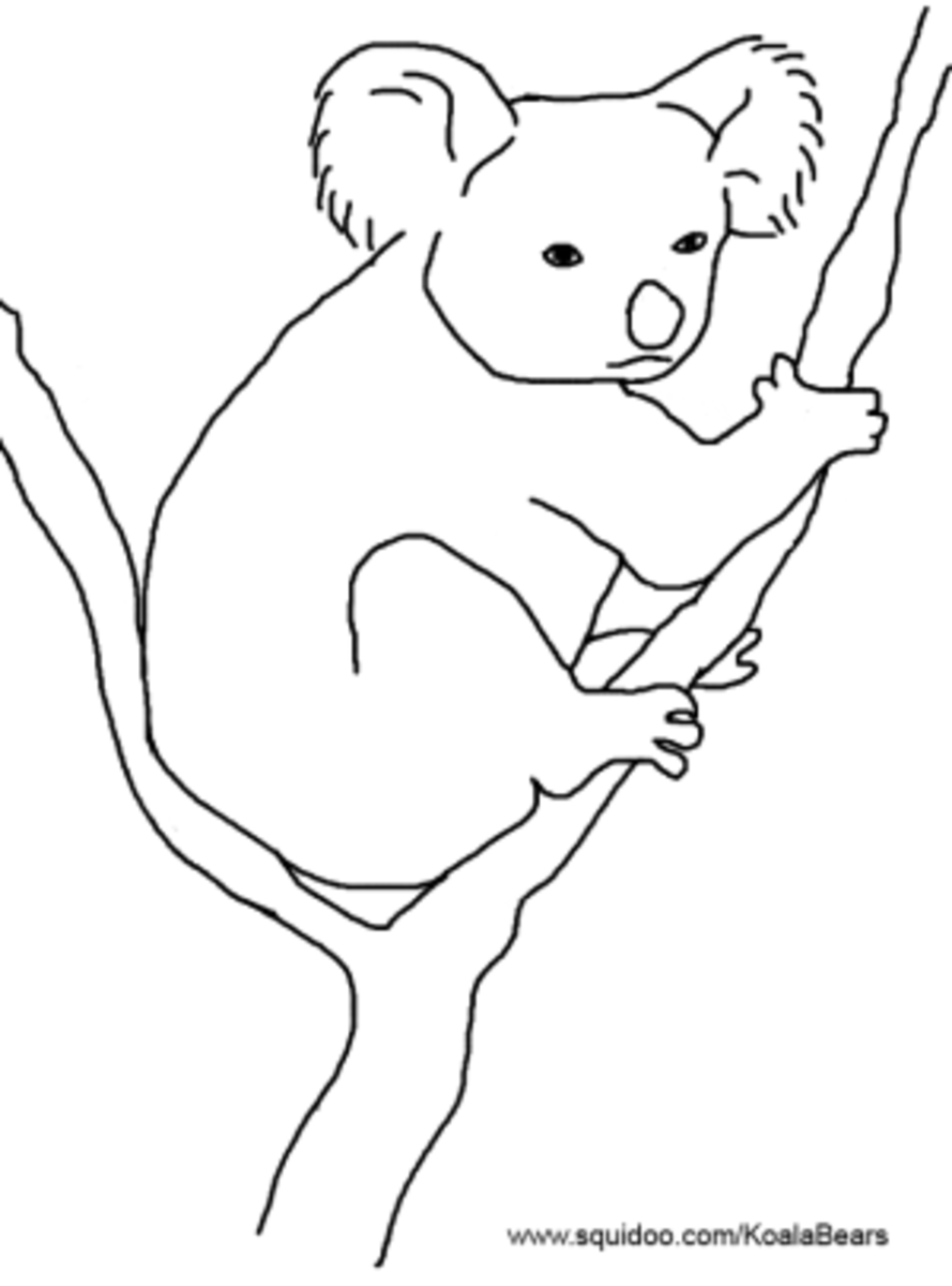 K Is For Koala Coloring Page koala template Colouring Pages (page 2)