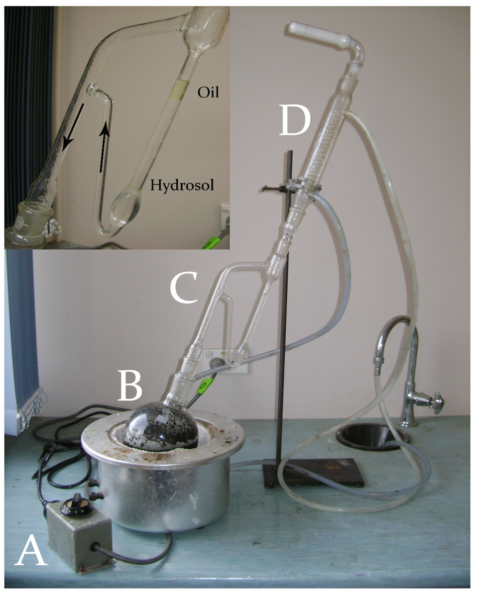 (A) Power regulator; (B) Heating mantle with round bottom flask containing water and aromatics; (C) Apparatus which returns the hydrosol to the still and maintains the essential oils; (D) The condenser.