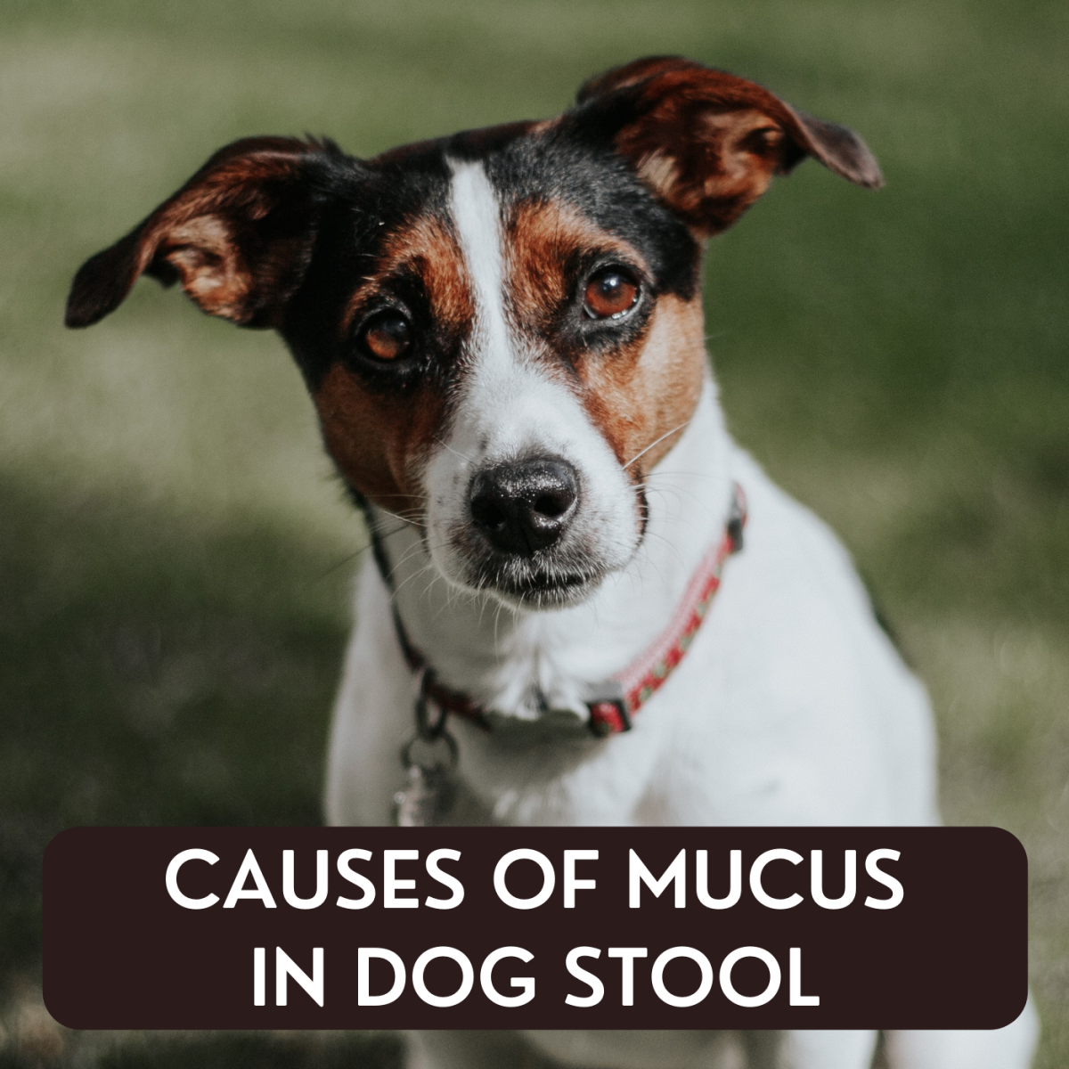 It's not uncommon to find mucus in your dog's stool, and some of the causes are benign. Learn more about why this occurs and when you should be concerned.