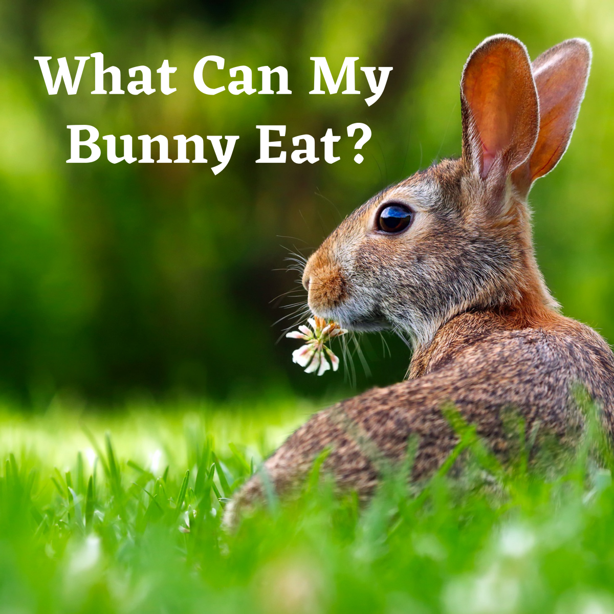 What's on the list of things to avoid feeding your rabbit?