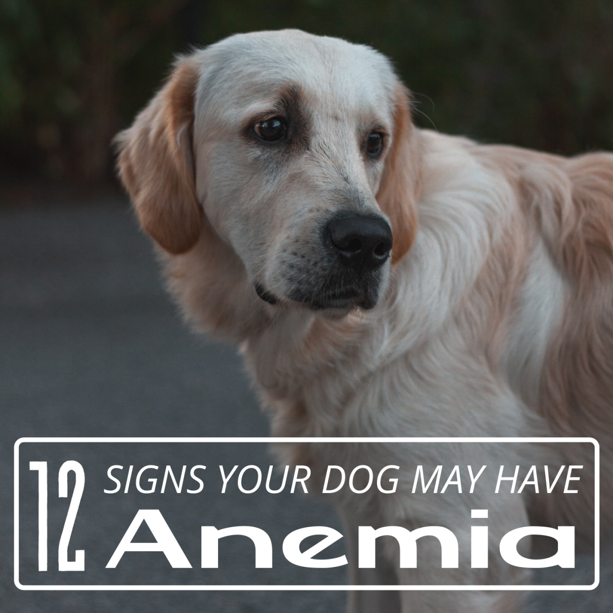 12 Signs of Anemia in Dogs