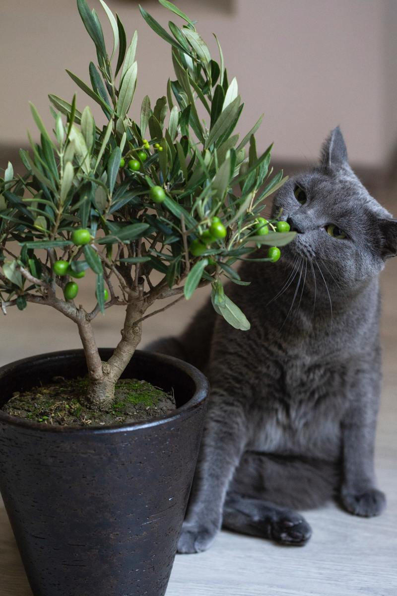 Is this plant safe for cats?