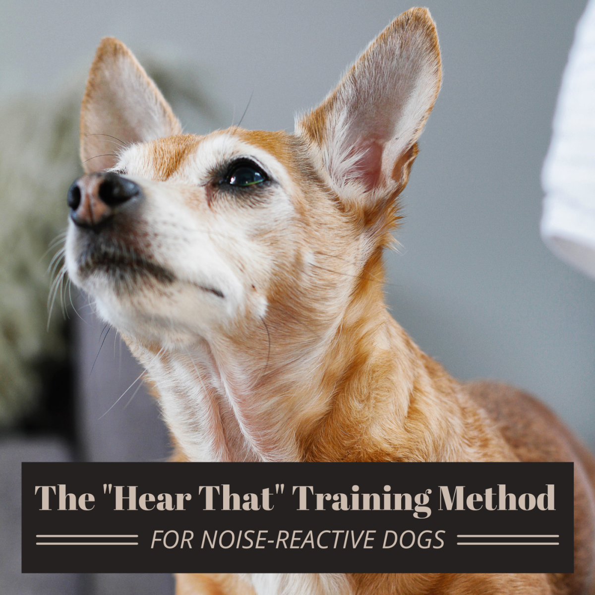 """If your dog is noise-sensitive, the """"hear that"""" method may be just what you're looking for."""