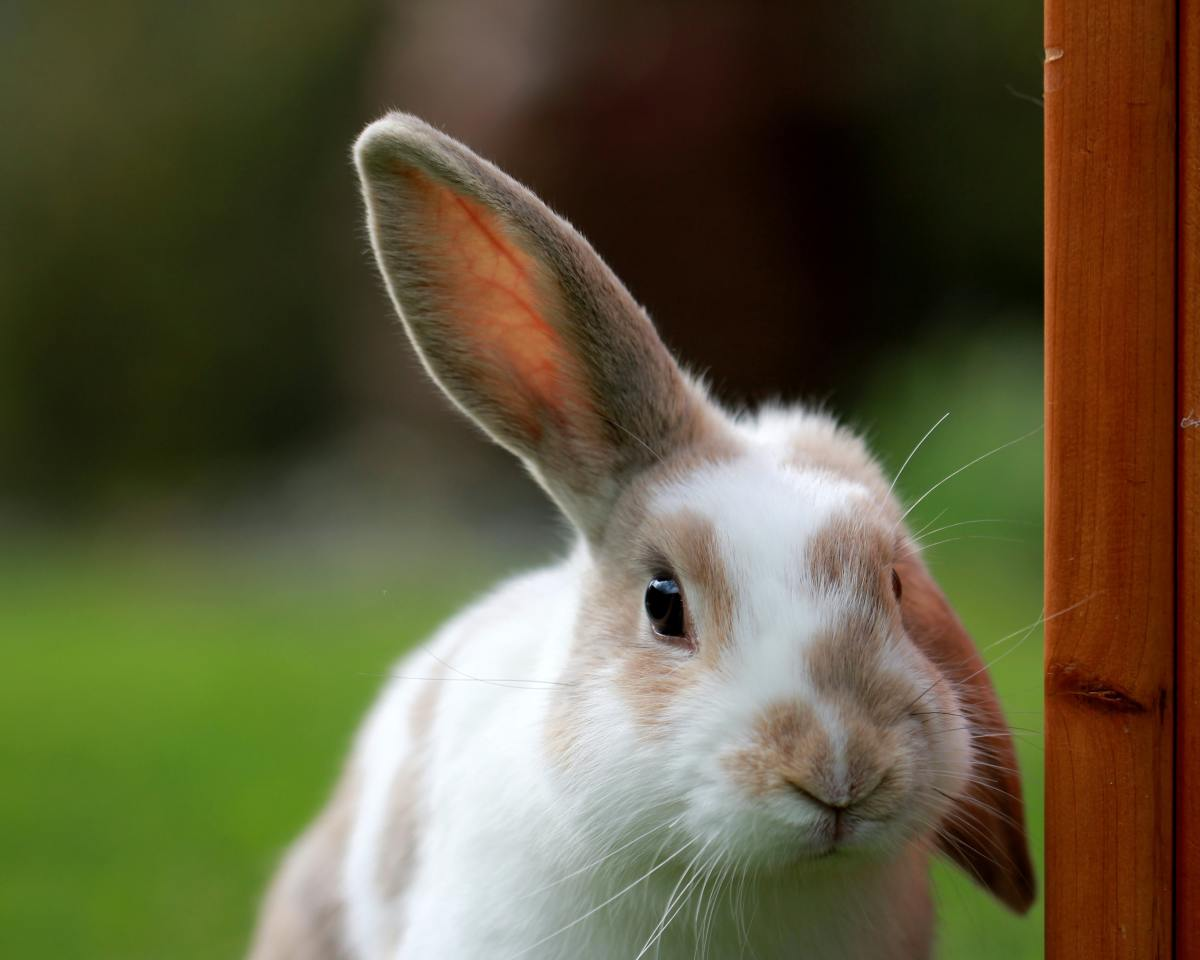 You'll be amazed by the richness of rabbit body language