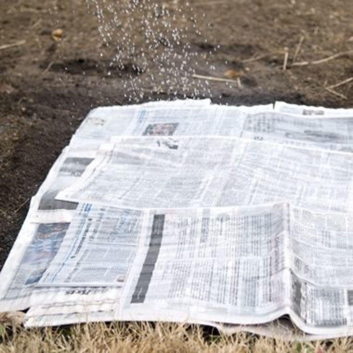 Start With Newspaper Or Cardboard