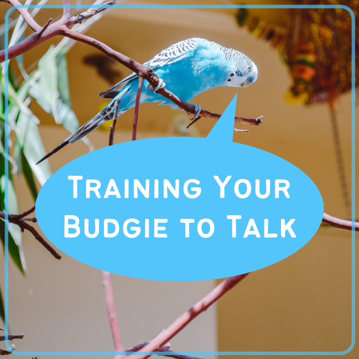 Get tips from a long-time parakeet owner on how to train your pets to talk!
