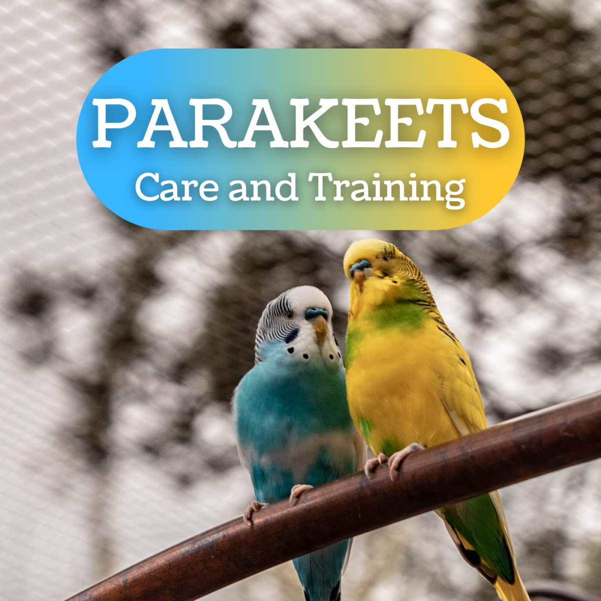 How to Choose, Care for, and Train a Parakeet