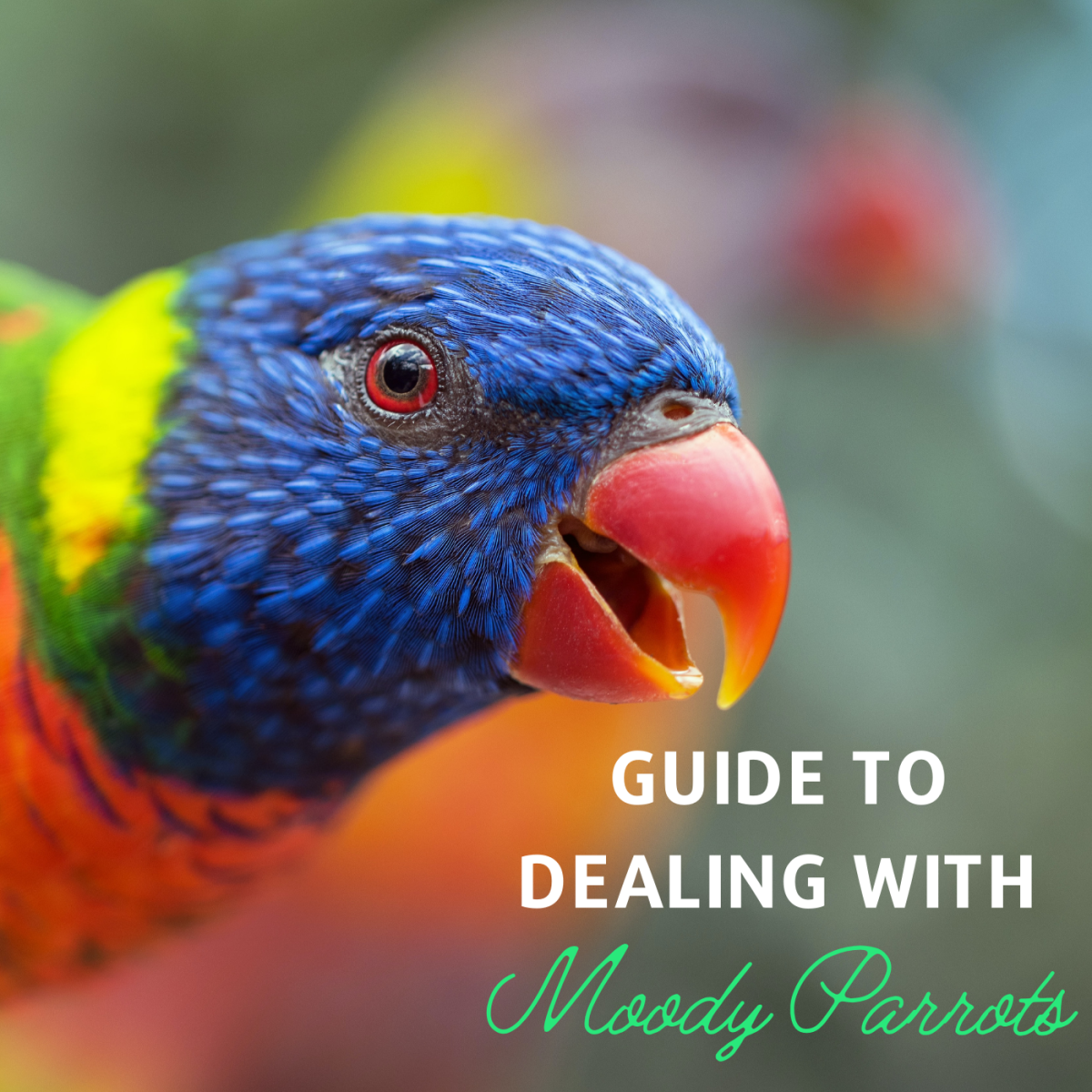 How to Minimize Hormonal Aggression in a Moody Parrot