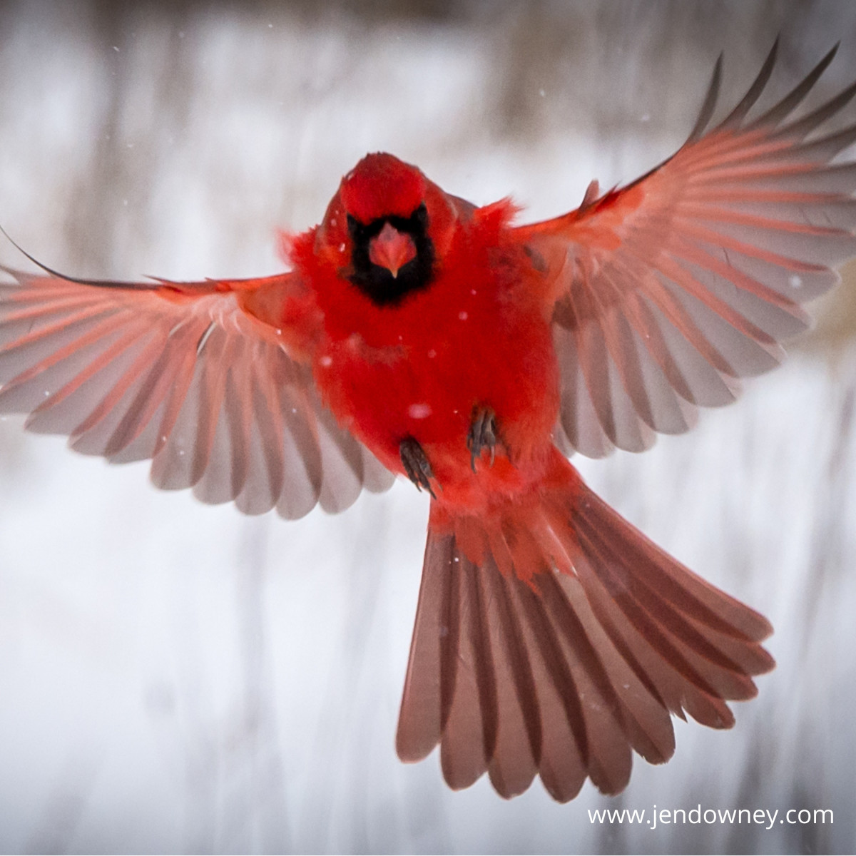meaning-of-the-cardinal