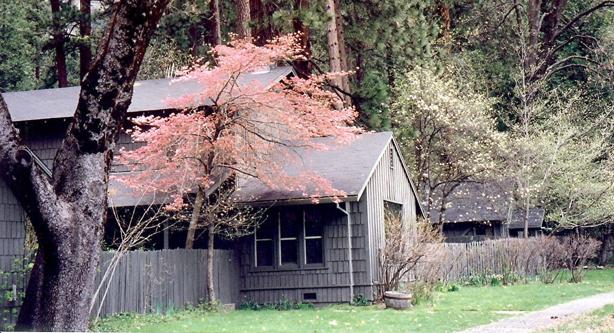 House adorned with Spring blooming trees