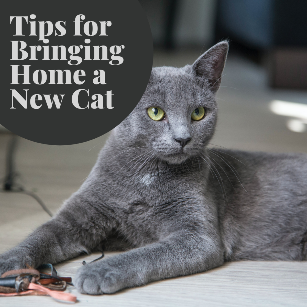 Find out some ways to make your new feline friend feel welcome in your home!