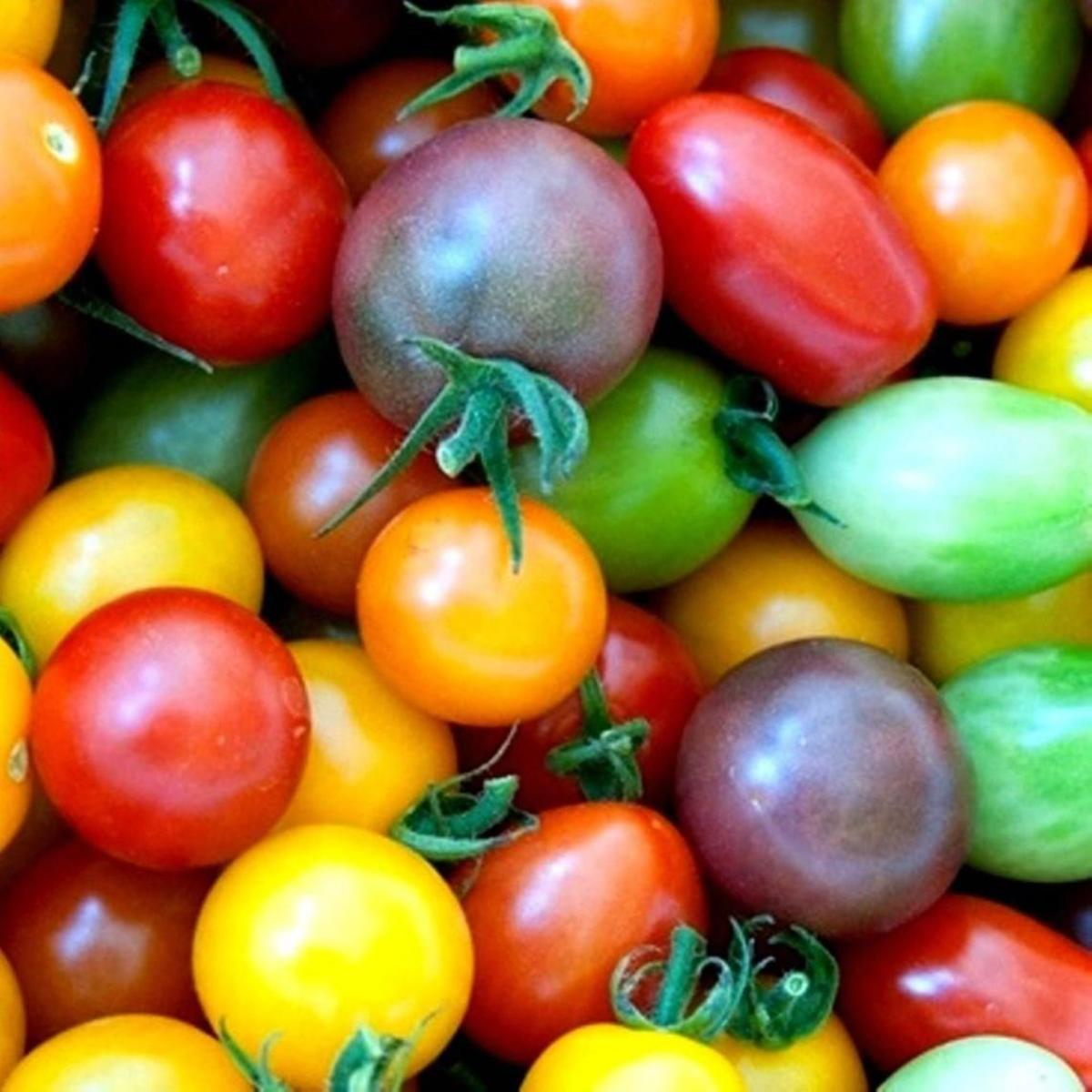 Mixture of different colors of cherry and grape tomatoes.