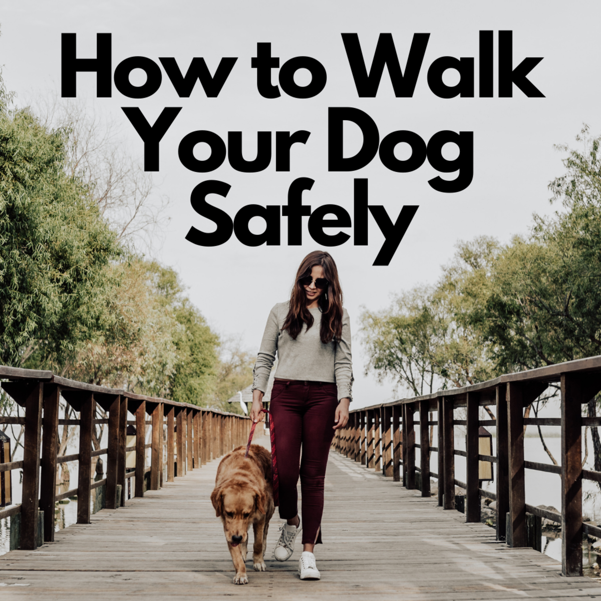 These tips will help you and your pup on your walks together.