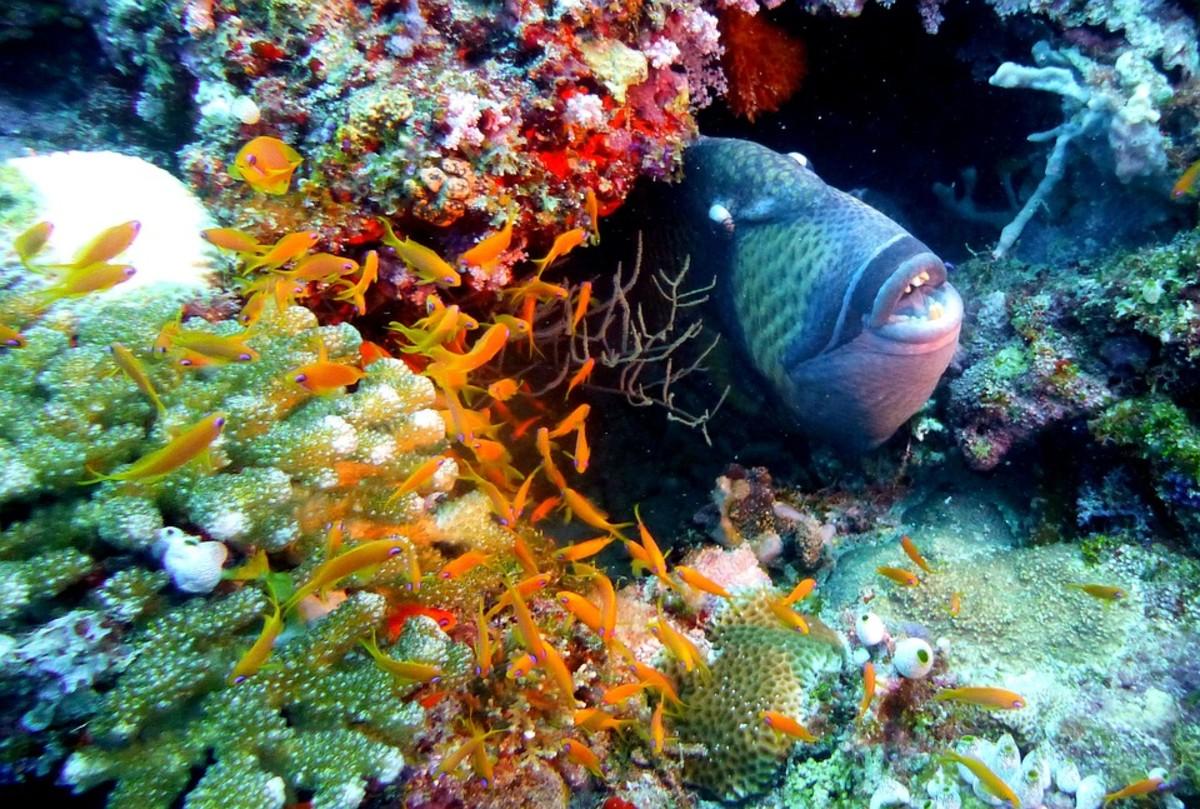 Fish in Natural Habitat