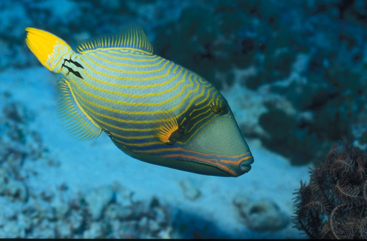The fish at the maldives island holiday resort