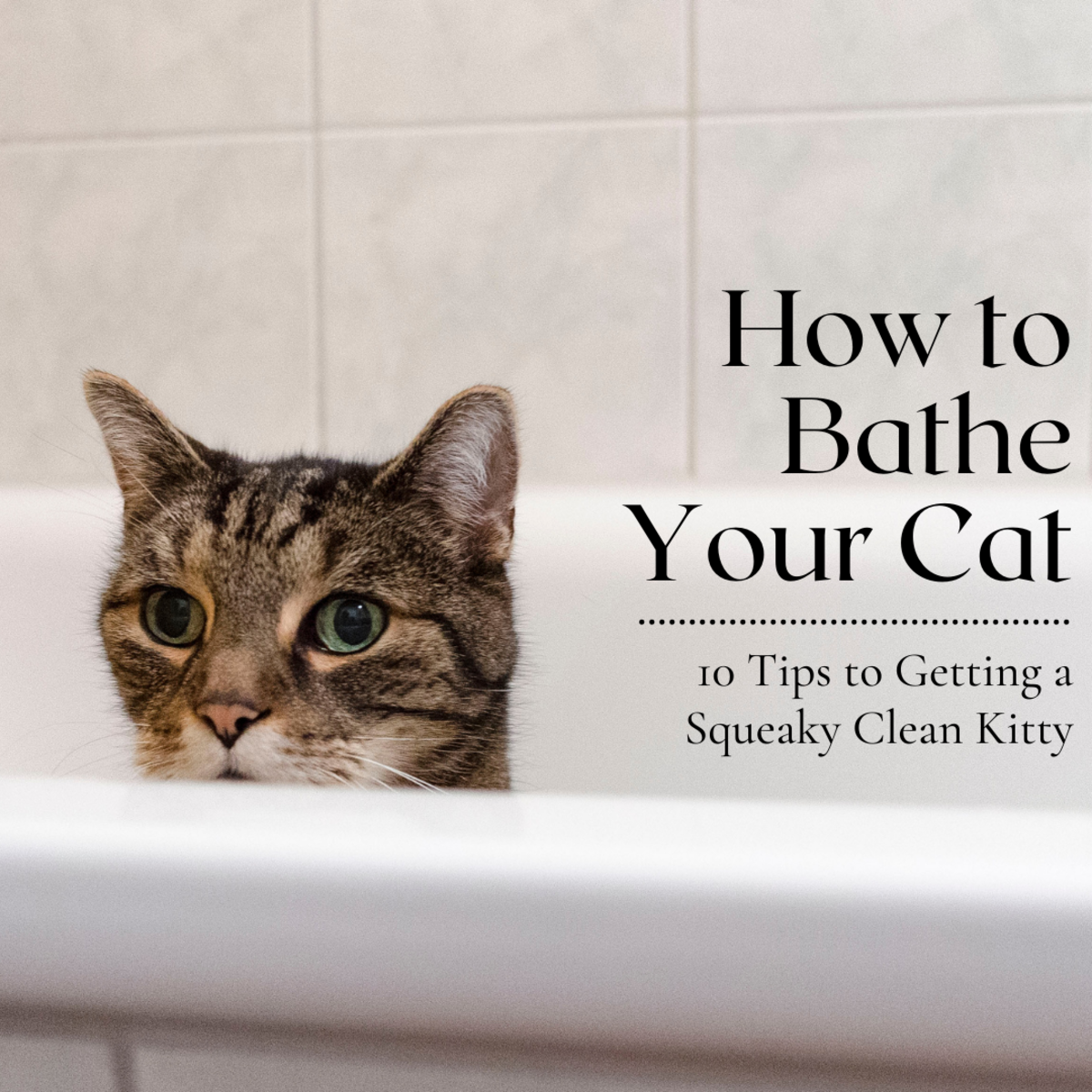 This guide will provide 10 tips to help you successfully (and safely!) bathe your feline friend.