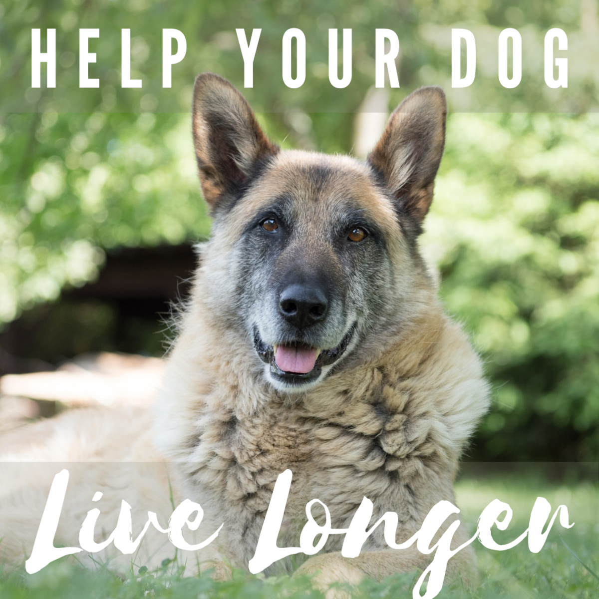 Seven easy tips to help your dog live longer.