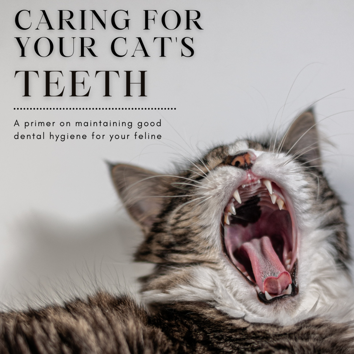 This guide will provide you with the information you need to help regularly maintain your cat's dental hygiene to keep them at their healthiest.