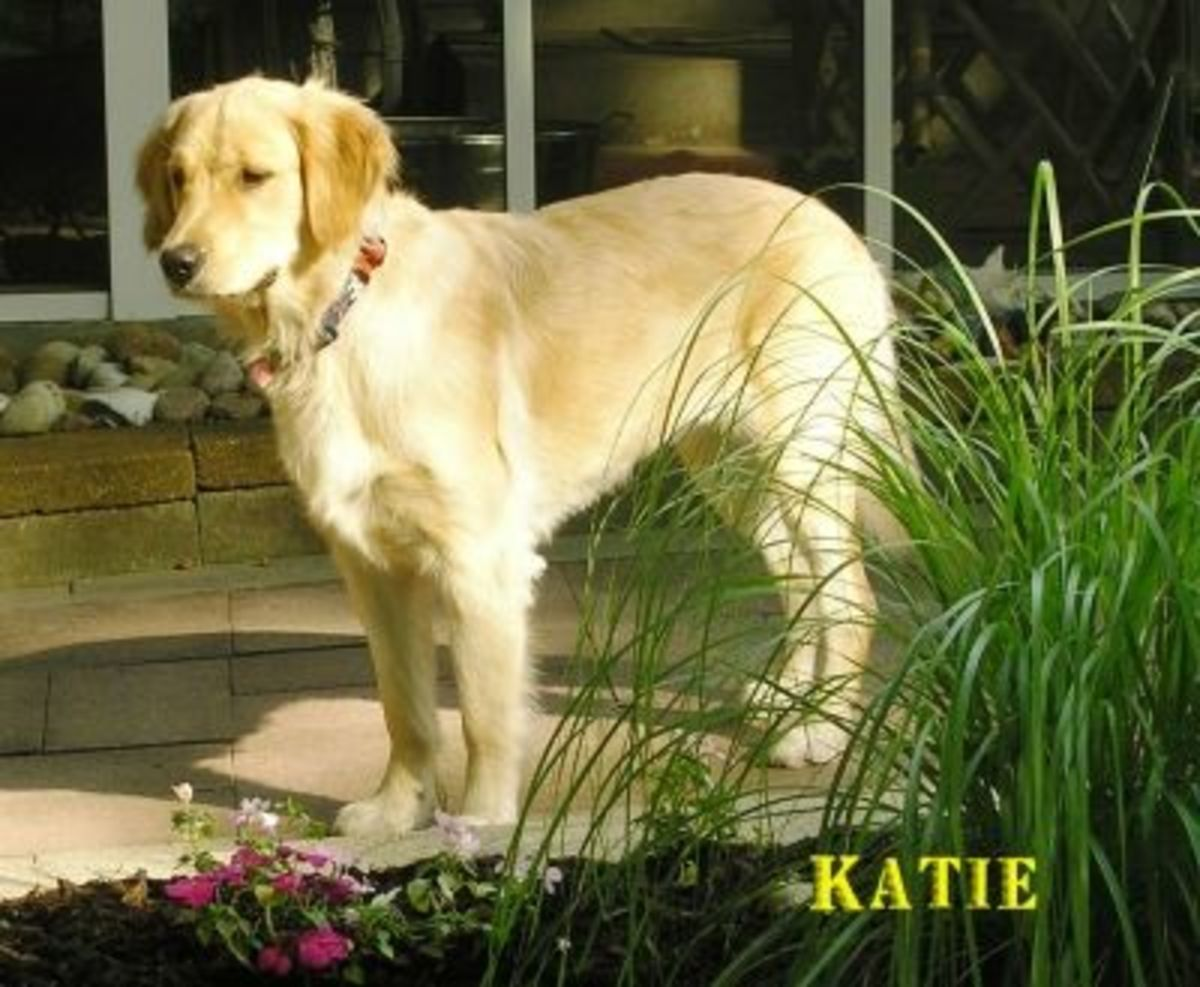 Katie - Adopted July 2012