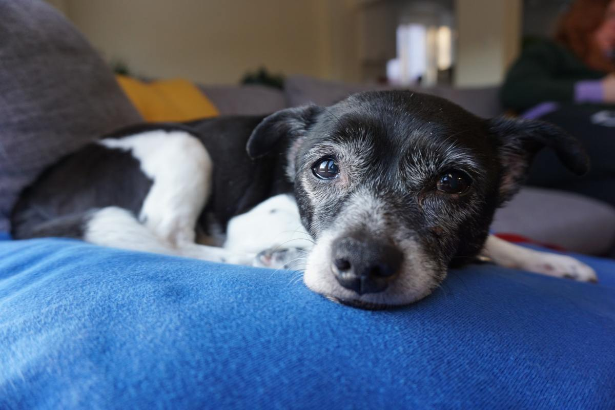 can-i-rename-a-rescue-dog-from-a-shelter